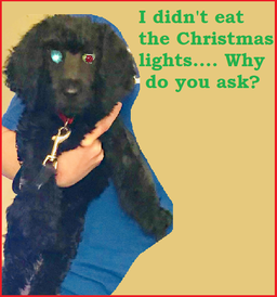 dog ate christmas lights